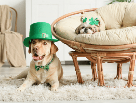 St. Patrick's Day at home