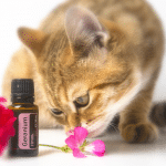 how to use essential oils with cats