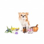 oils with dogs