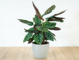 pet friendly indoor plants